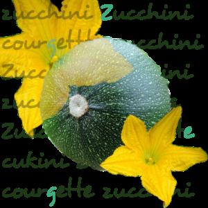 Zucchini mit Bluete