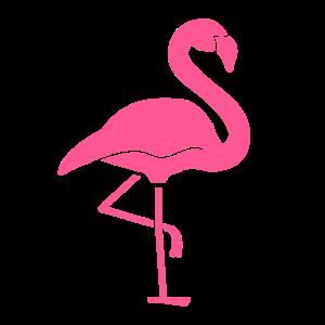 Flamingo rosa Vogel