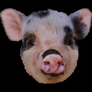 Schwein Ferkel Pig Geschenk