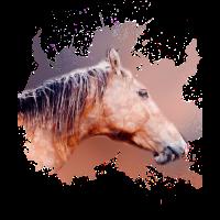 Pferd Pony Gaul Geschenk shirt