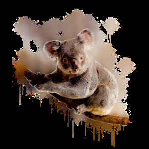 Koala bär australien geschenk shirt