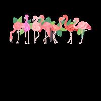 Schöne Gruppe von Flamingos
