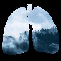 Wald Nebel mystische Natur Outdoor Lunge