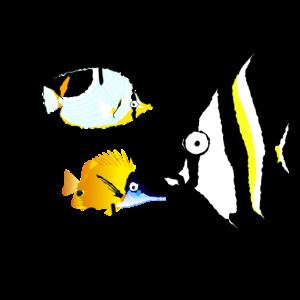 Fish & Chips lustig Comic