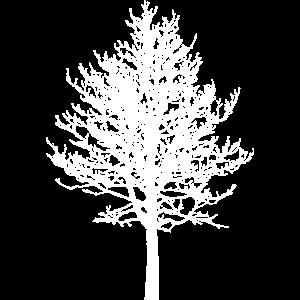 Laubbaum 2 Silhouette Weiss