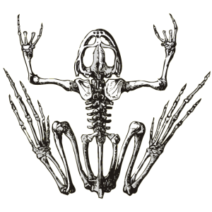 rockfrog
