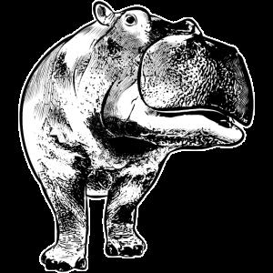 Nilpferd Hippopotamus