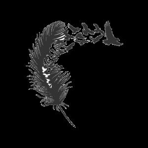 Vogel Feder