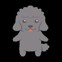 Poodle Gift Idea