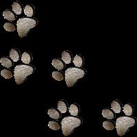 Pfotenabdrücke vom Hund / Hundeliebe