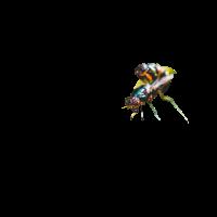 09 Fliege