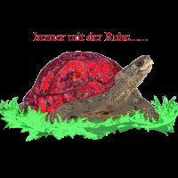 Immer mit der Ruhe, Schildkröte, Achtsamkeit