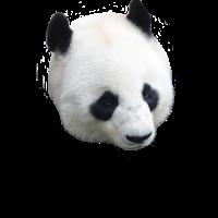 Panda mit liebem Gesicht