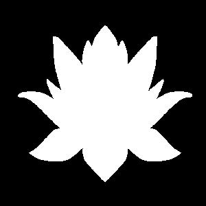 lotusblume, Blume