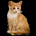 Koszulka kot 12