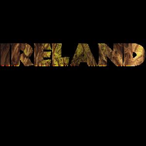 Ireland Irland Wald Spaziergang Wandern