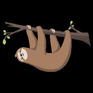 Faultier Sloth hängt am Ast