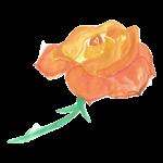Rose gelb-orange