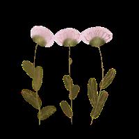 3 gepresste Blumen