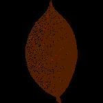 blatt laub leaf baum natur wildnis skelett wald