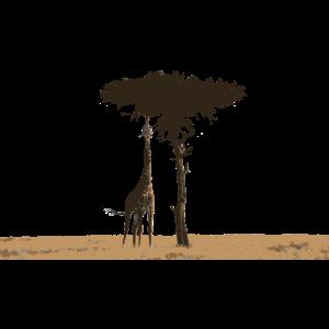 Giraffe und Baum in der afrikanischen Savane