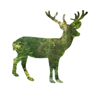 hirsch hirschkopf Wald Geschenk Natur Tier