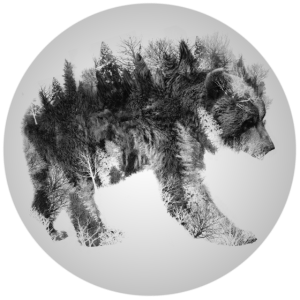 Der Bär und der Wald