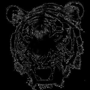 Tiger Tigerkopf Raubkatze Katze