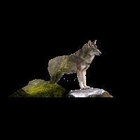 Wolf Natur Wald Doppelbelichtung