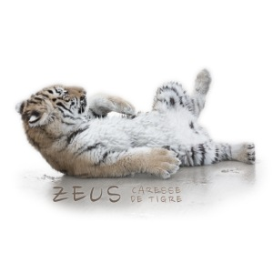 Zeus bébé plage