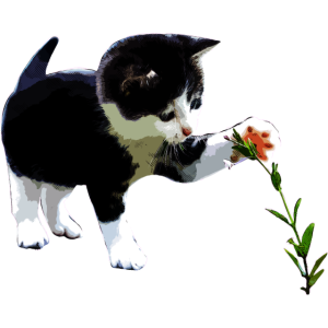 Katze Blume Mietzekatze Kätzchen Katzenbesitzer
