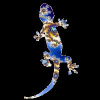 Gecko Fraktal