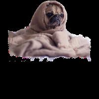 Mops Bulldogge Hund Decke Nicht Heute