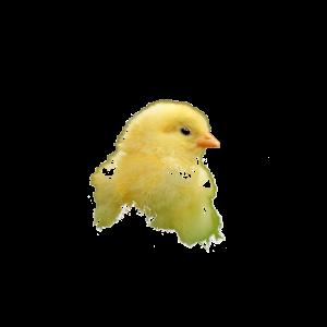 Küken Oster Süß Tier