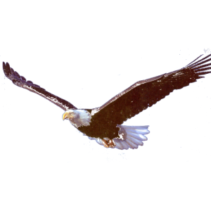 Adler Tier Natur Berge