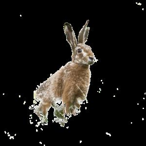 Osterhase Ostern Hase Süß
