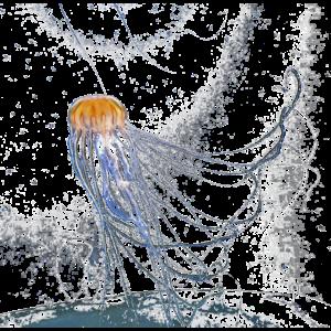 Qualle Tauchen Meer
