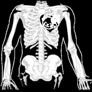 Katze Skelett Knochen Röntgen Geschenk Shirt