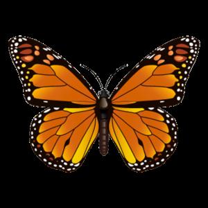 Butterfly Geschenk Shirt Orange Exotisches Tier