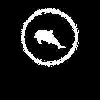 Delfin Meer Fische Dolphin Delfine
