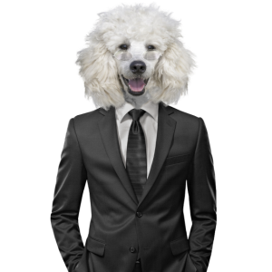 Hund | Hund | Tier im Anzug