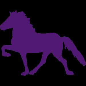 Icelandic Horse / Islandpferd