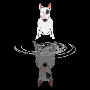 Bullterrier Hund Wasser Spiegelbild Geschenk