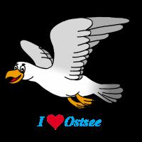 Ostsee Möwe
