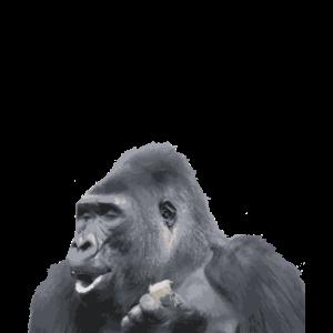 Gorilla Silberrücken Affe