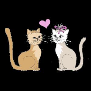 Verliebte Katzen