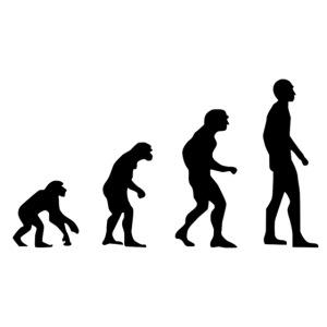 Du singe a l'homme