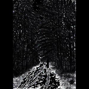 Kohle Wald