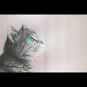 Katzen Leben