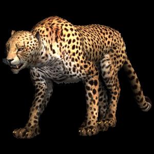Gepard - Leopard